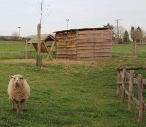 Cabane en planches
