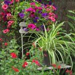 Brande jardin fleurs